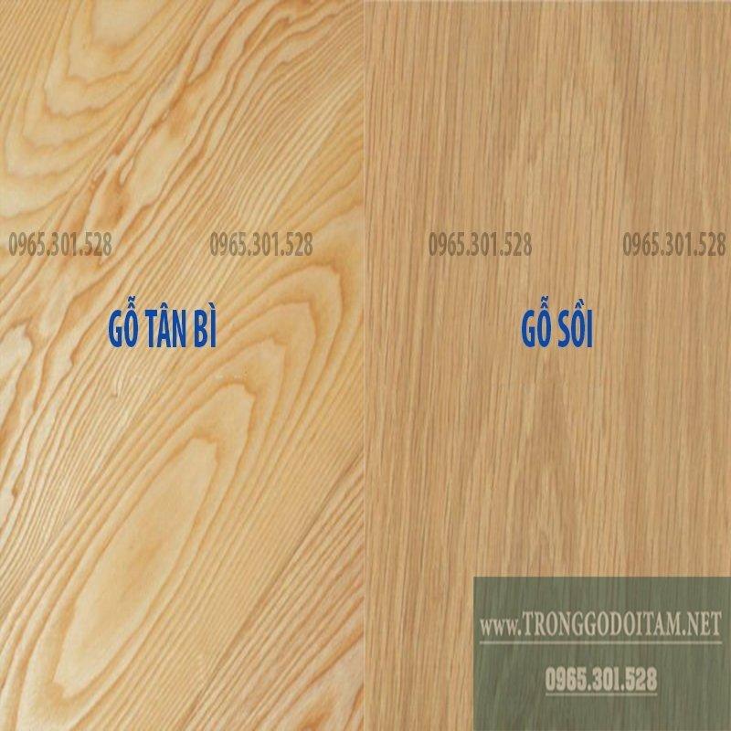 cách phân việt gỗ sồi và gỗ tân bì